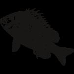 Žuvų dydžiai